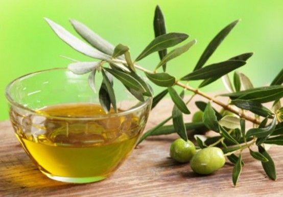 infusion de hojas de olivo