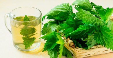 infusion de ortiga verde